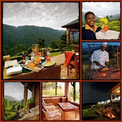 Silverback Lodge-overlooking Bwindi Impenetrable Forest