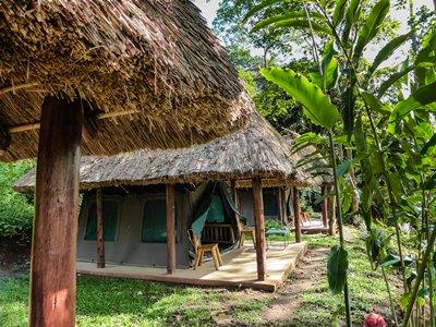 Kibale Forest Camp - Primate Capital of East Africa - Kibale Forest