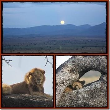 8 day Luxury Kidepo Valley - Murchison Falls Park Wildlife Safari