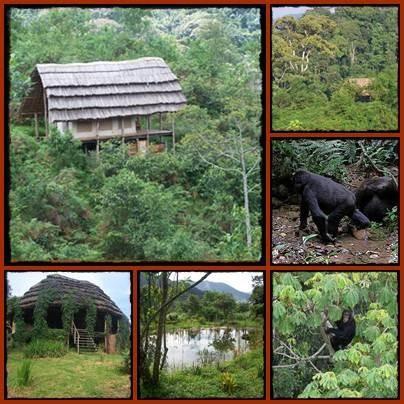 Cuckooland Lodge - A Wilderness Experience - Bwindi Forest