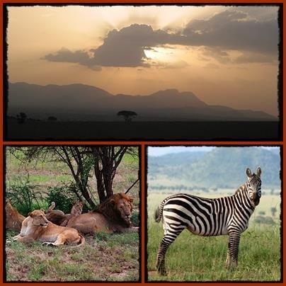 5 Day Kidepo Valley Park Wildlife Safari