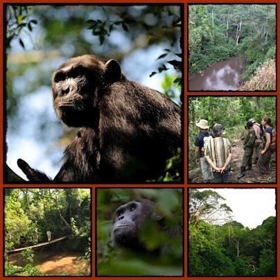 Queen Elizabeth Park Wildlife Safari