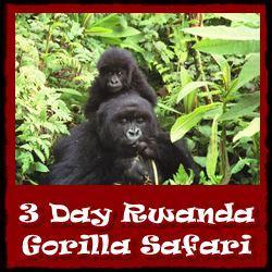 Best Gorilla - Chimpanzee Trekking Wildlife Safaris in Rwanda