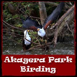 Akagera-National-Park-Birding