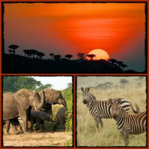 Akagera-National-Park-Rwanda