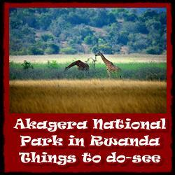 Akagera-National-Park-things-to-do35