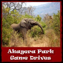 Akagera-Park-Game-Drives
