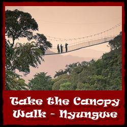Take-the-Forest-Canopy-Walk