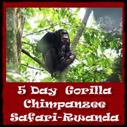 rwanda-5day-gorilla-chimpanzee-safari