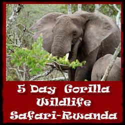 rwanda-5day-gorilla-wildlife-safari