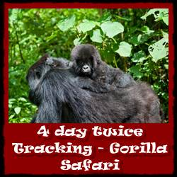 4-day-twice-gorilla-tracking-Rwanda