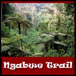 Ngabwe-Trail