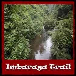 imbaraga-trail