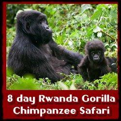 8-day-rwanda-safari