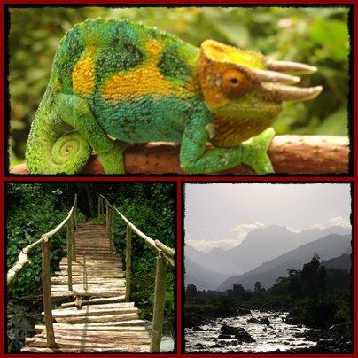 ruboni-forest-walk