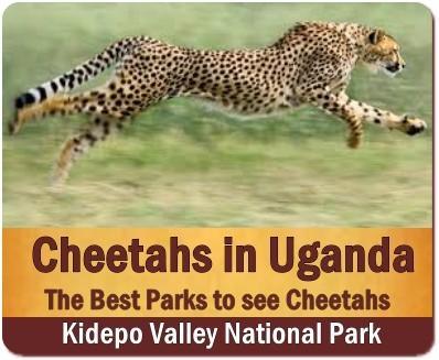 Best Wildlife Parks to see Cheetahs