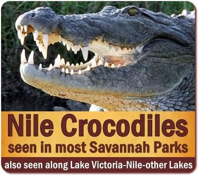 Best Places to see Nile Crocodiles