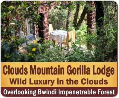 Clouds Mountain Gorilla Lodge