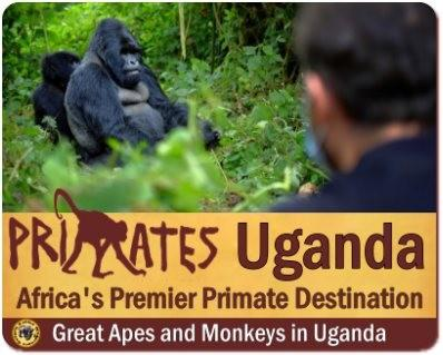 Primates found in Uganda