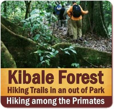 Hiking Trails in and near Kibale Forest