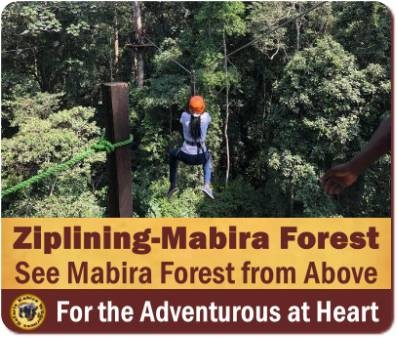 Top Things to Do and See in Mabira Forest