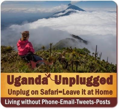 Uganda Unplugged on Safari