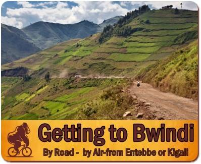 Getting to Bwindi Impenetrable Forest