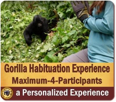 Gorilla Habituation Experience Safari