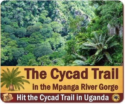 The Cycad Trail in the Mpanga River Gorge