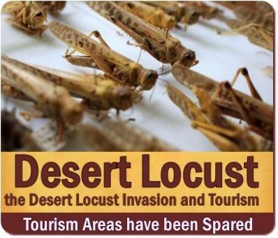 The Desert Locust Invasion and Tourism in Uganda