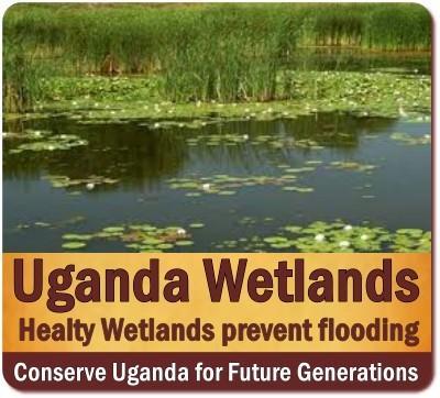 Restoring Uganda Wetlands