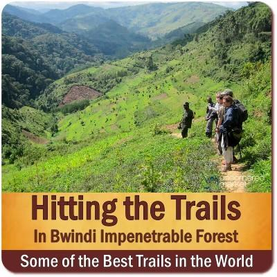 Bwindi Impenetrable Forest Hiking Trails