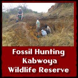 Fossil-Hunting-Kabwoya