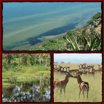 kabwoya-wildlife-reserve1