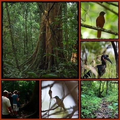 Budongo-Forest-for-Birding.jpg