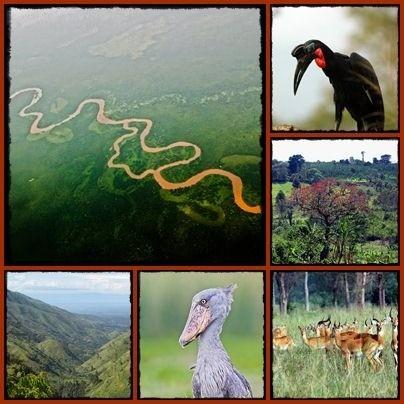 Things to do and see in the Semliki -Semuliki - Park - Wildlife Reserve