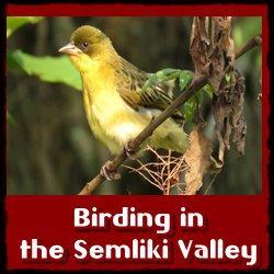 birding-Semliki