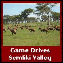 game-drives-semliki