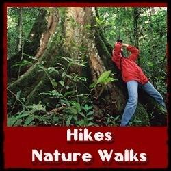 Hikes-Nature-walks-kibale-forest