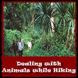 Dealing-with-animals=while-hiking