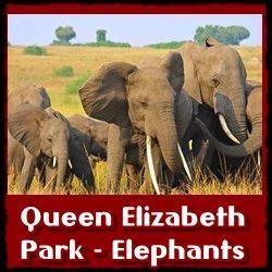 Queen-elizabeth-Park-Elephants
