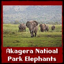Best Places to see Savanna Elephants