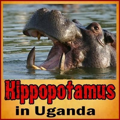 Best places to see Hippos