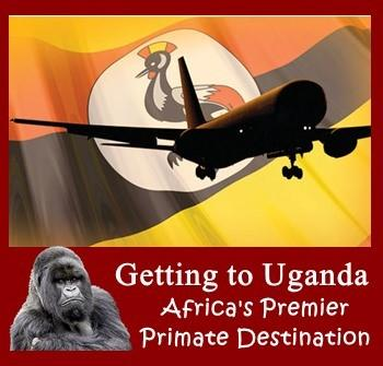 Daily Direct Flights from NYC to East Africa