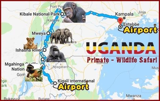 7-Day-Gorilla-Chimpanzee Habituation Experience-Wildlife Safari