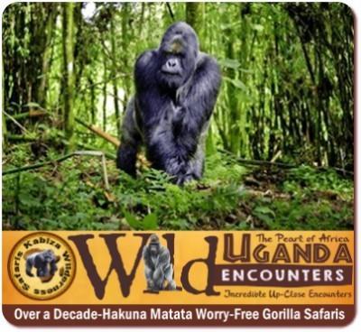 Trek Gorillas in Uganda
