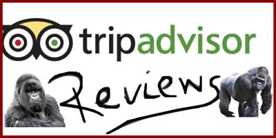 Gorilla Habituation Experience Reviews