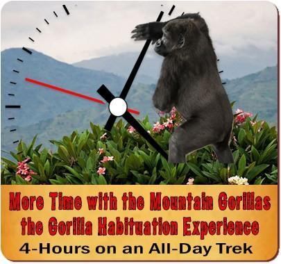 Gorilla-Chimpanzee Habituation Experience-Wildlife Safari