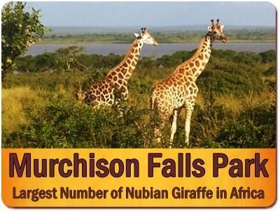 Murchison Falls Park Private 3-Day Luxury Wildlife Safari