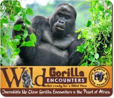 Gorilla Habituation Experience–Chimpanzee–Wildlife Safari